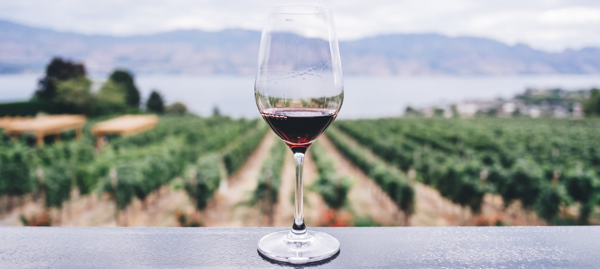 Wine glass with vineyards in the background