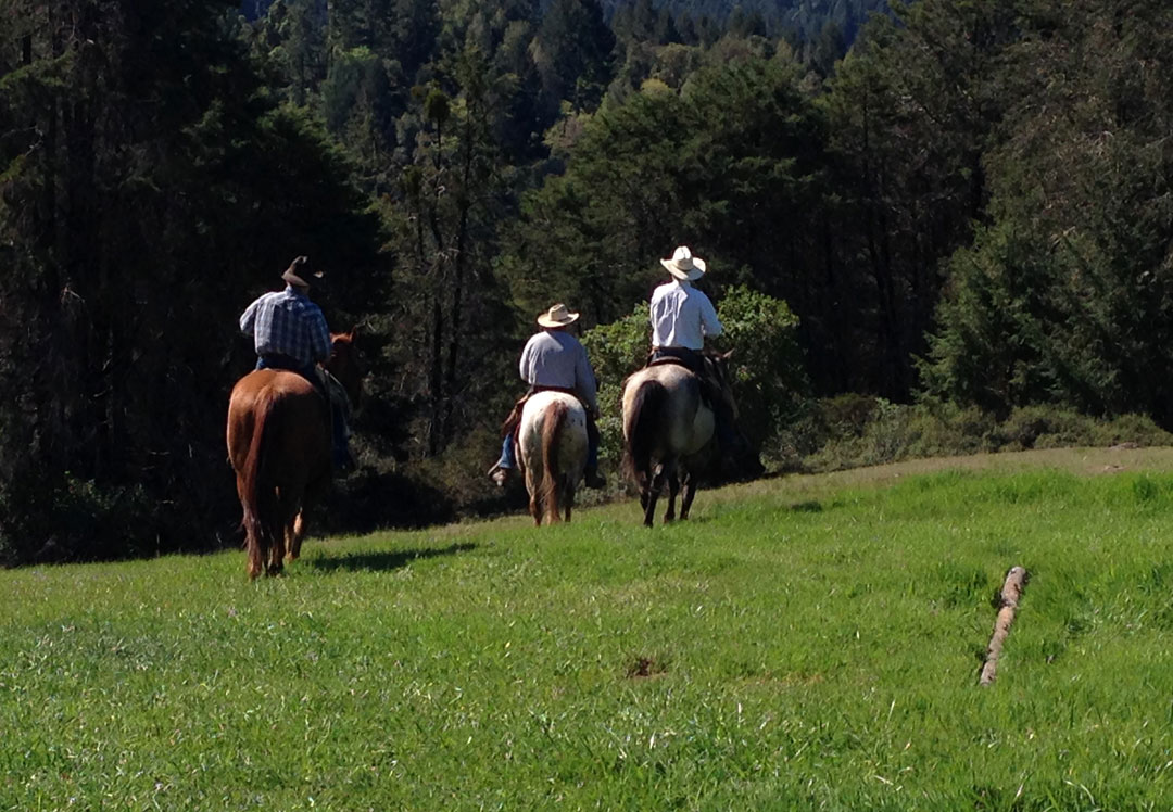 Picture of 3 people on horses shot from behind in grassy field with trees in the background
