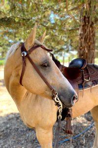Tan horse with hear turned facing backwards